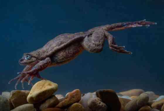 Romeo, la rana más solitaria del mundo, finalmente tiene a su Julieta