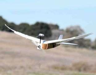 'PigeonBot', el primer robot que puede doblar sus alas como un pájaro real