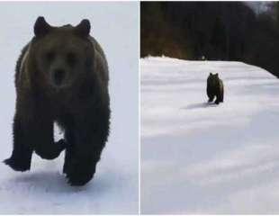 Esquiador filma trepidantes imágenes de un oso que le persigue