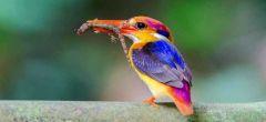El cambio climático podría causar en este siglo pérdidas abruptas de biodiversidad