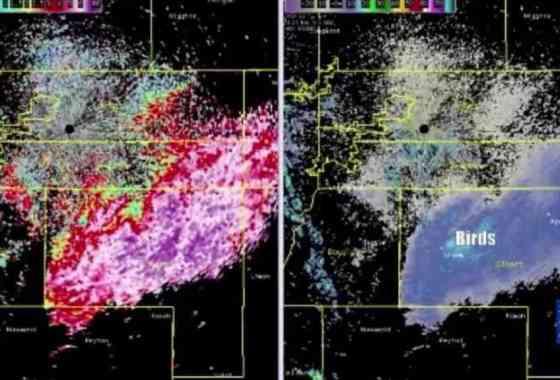 Enjambre de mariposas aparece en el sistema de radar de Denver