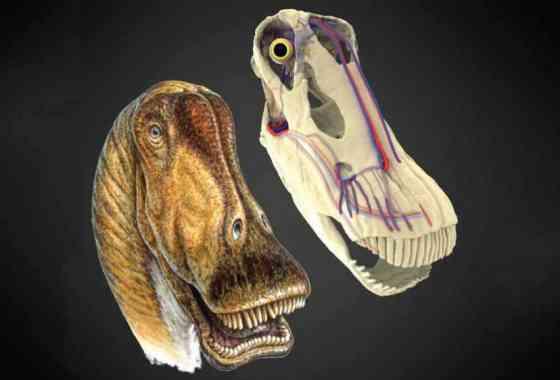 Los grandes dinosaurios se mantuvieron frescos gracias a grupos de vasos sanguíneos en sus cabezas