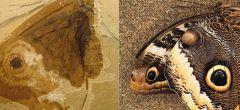 Insecto del Jurásico se parece a una mariposa moderna