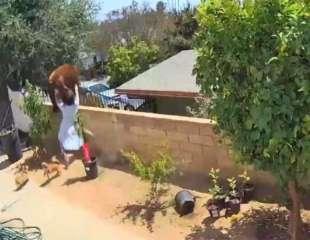 Desesperada adolescente empuja a un oso para salvar a sus mascotas