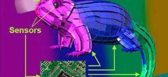 Camaleón mecánico se hace 'invisible' con fondos de colores