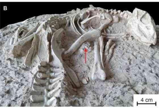 Nuevos dinosaurios 'durmientes eternos' desenterrados en China